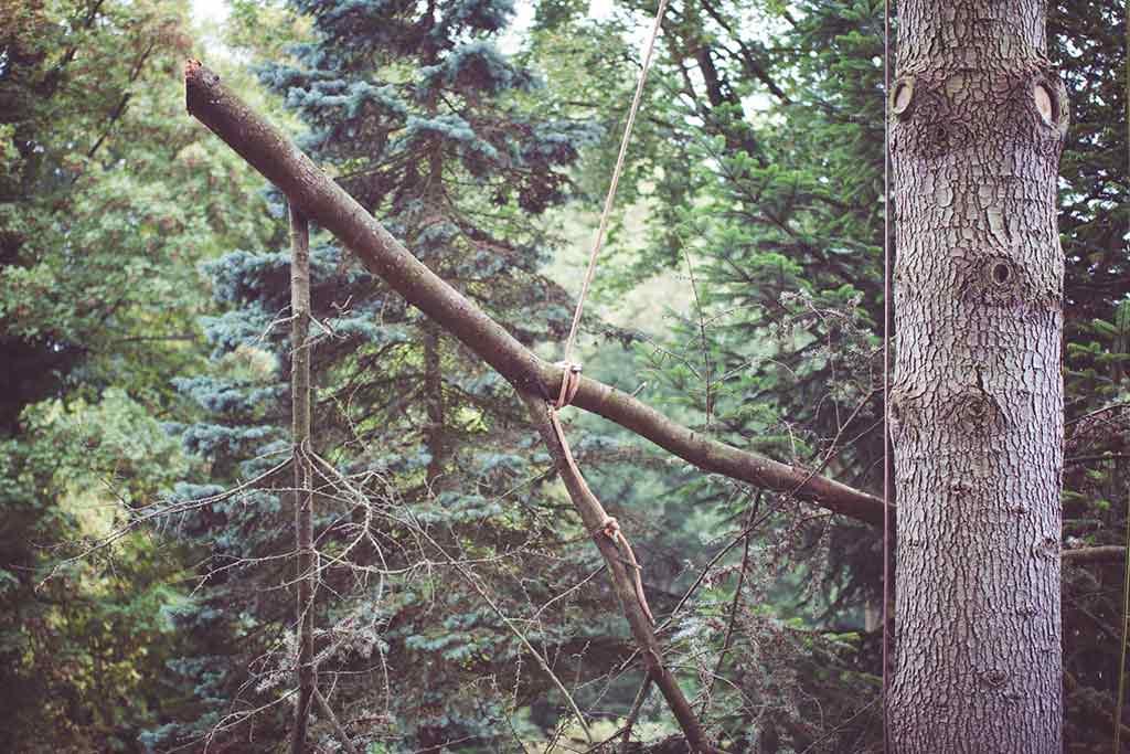 Tree Dimension retentie