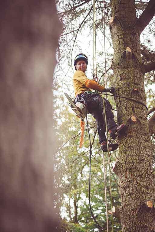 Tree Dimension Thomas Ranschaert matériel de grimpe